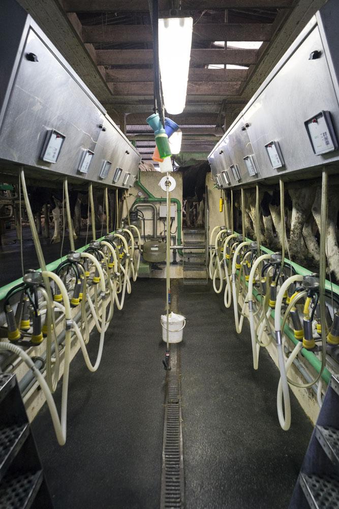Production du lait - Salle de traite